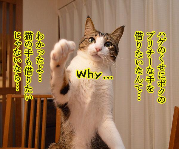猫の手も借りたいと言うけれど… 猫の写真で4コマ漫画 3コマ目ッ