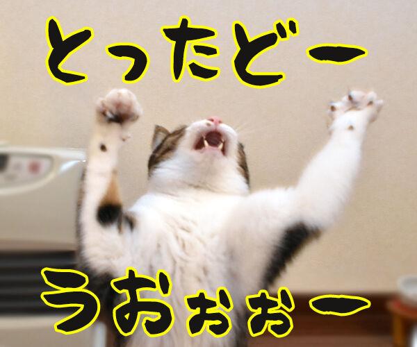 あずきさんとひもであそぶ 猫の写真で4コマ漫画 3コマ目ッ
