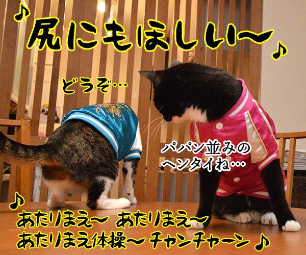 あずきとだいずのあたりまえ体操? 猫の写真で4コマ漫画 4コマ目ッ