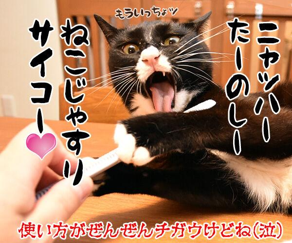 猫さんに大人気の『ねこじゃすり』を買ってみたのッ 猫の写真で4コマ漫画 4コマ目ッ