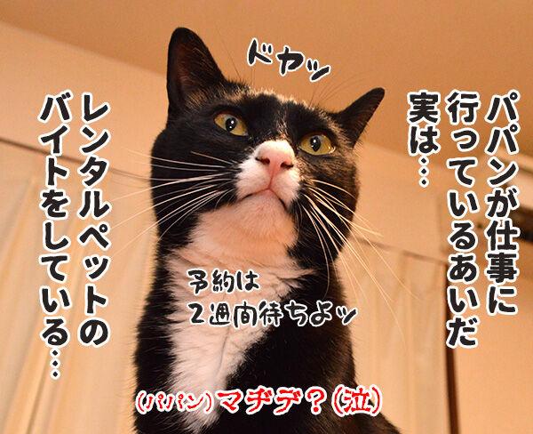実は○○だった話 猫の写真で4コマ漫画 4コマ目ッ