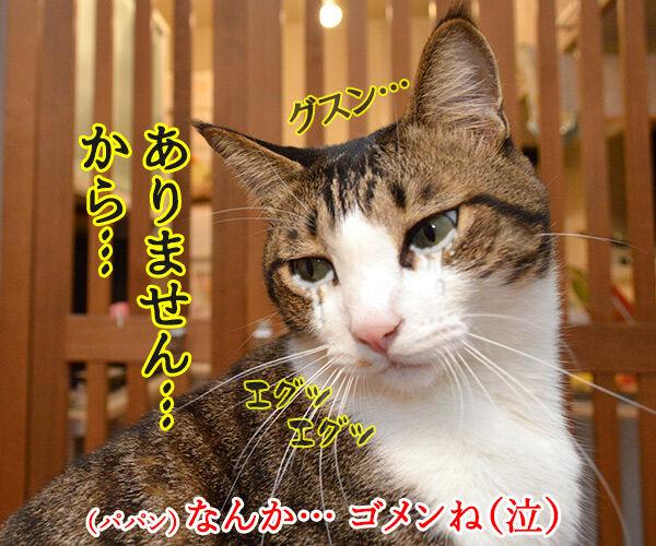 そこのハゲ、答えたまえ 猫の写真で4コマ漫画 4コマ目ッ