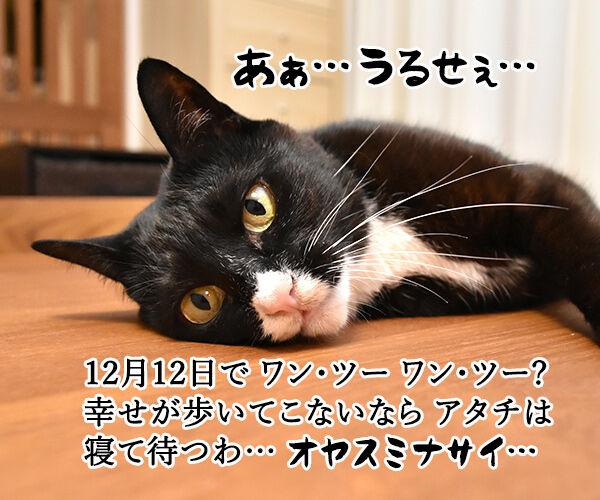 ワン・ツー ワン・ツー しあわせは歩いてこないのよッ 猫の写真で4コマ漫画 2コマ目ッ
