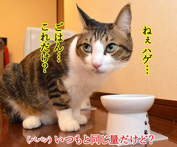 あずきさん ごはんだよぉー 猫の写真で4コマ漫画 2コマ目ッ