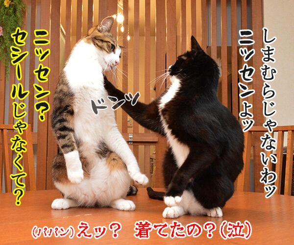 就職活動に必要なもの 猫の写真で4コマ漫画 4コマ目ッ