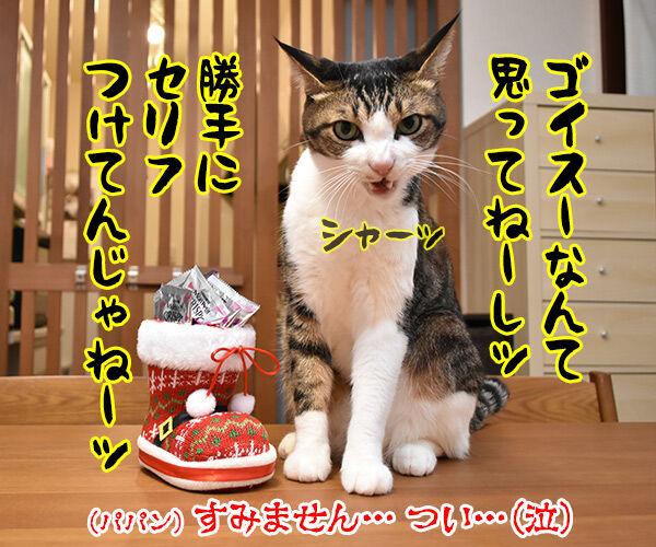 あずきさんとだいずさんにクリスマスプレゼントなのッ 猫の写真で4コマ漫画 2コマ目ッ