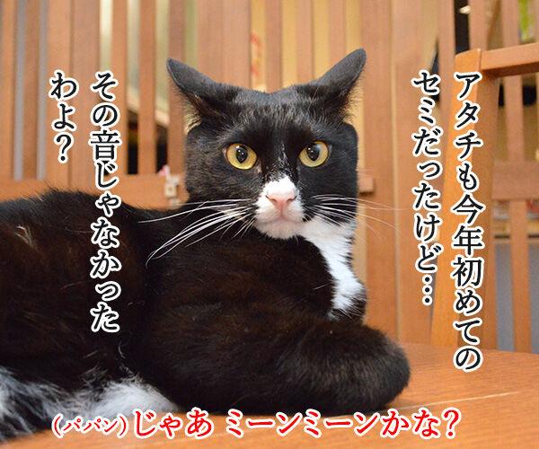 セミの声 猫の写真で4コマ漫画 3コマ目ッ