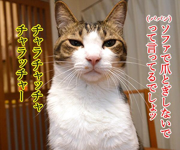 パパンの説教 其の二 猫の写真で4コマ漫画 1コマ目ッ