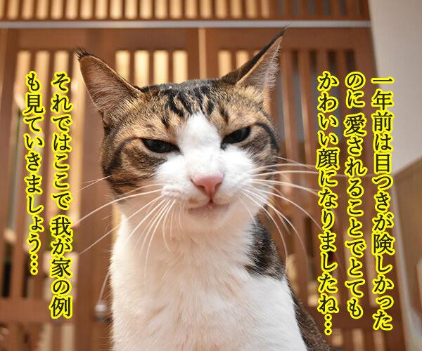 愛情を受け続けた猫ちゃんがとってもかわいくなったんですってッ 猫の写真で4コマ漫画 2コマ目ッ