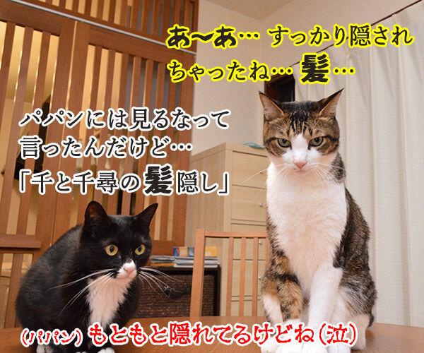 見ちゃったけどなにか? 猫の写真で4コマ漫画 4コマ目ッ
