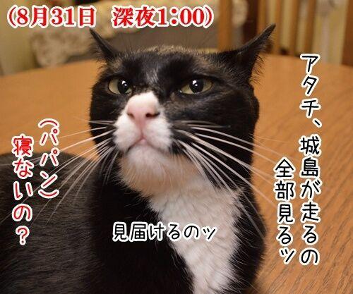 見届けなくちゃ 猫の写真で4コマ漫画 1コマ目ッ