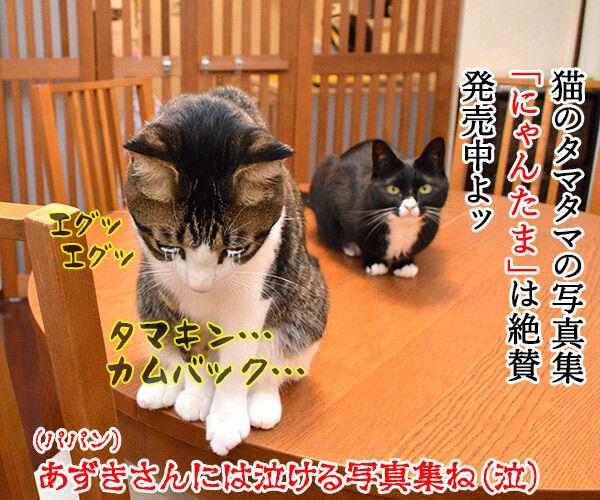 猫好きが泣いて喜ぶ写真集をご紹介ッ 猫の写真で4コマ漫画 4コマ目ッ