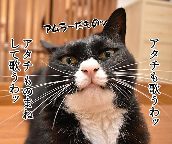安室ちゃんの歌でどれが好き? 猫の写真で4コマ漫画 3コマ目ッ