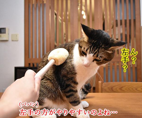 猫用たわしでブラッシングしたら? 猫の写真で4コマ漫画 2コマ目ッ