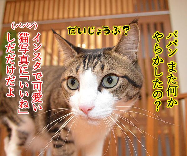 だいず女王様がお怒りですッ 猫の写真で4コマ漫画 3コマ目ッ