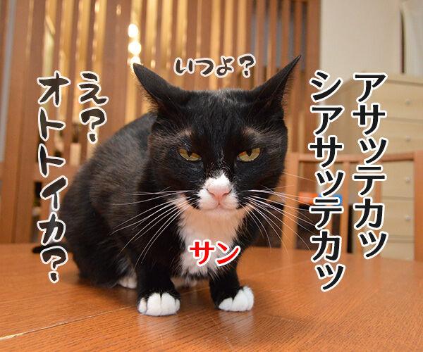 もののけ姫とアシタカとサン 猫の写真で4コマ漫画 2コマ目ッ