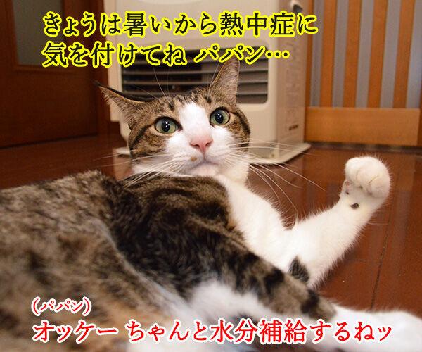 熱中症に気をつけてッ 猫の写真で4コマ漫画 2コマ目ッ