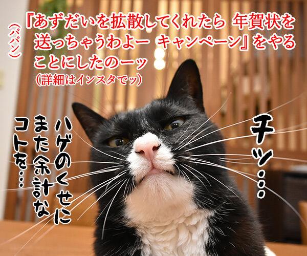 『あずだいを拡散してくれたら 年賀状を送っちゃうわよー キャンペーン』応募してねーッ 猫の写真で4コマ漫画 1コマ目ッ