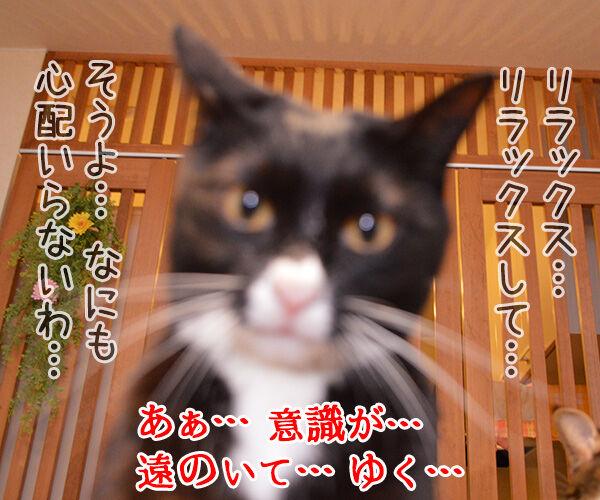Dr.だいず 猫の写真で4コマ漫画 3コマ目ッ