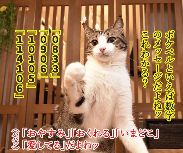 ポケベルが鳴らなくて ポケベルのサービスが終了しちゃったのよッ 猫の写真で4コマ漫画 2コマ目ッ
