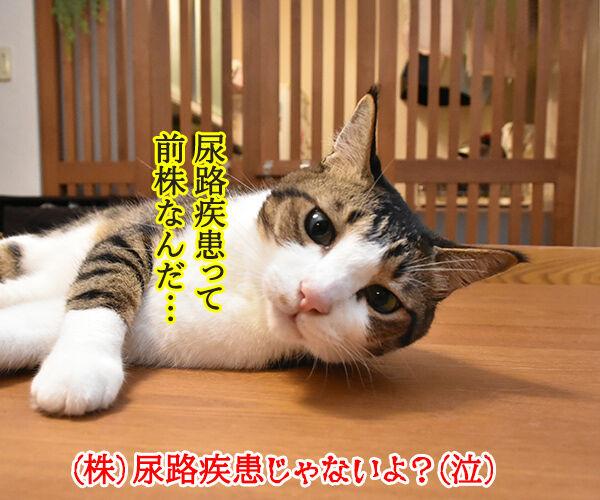 猫さんは寒くてお水飲まないと下部尿路疾患になっちゃうのよッ 猫の写真で4コマ漫画 5コマ目ッ
