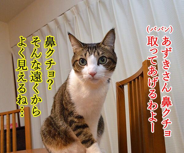 天体観測 猫の写真で4コマ漫画 1コマ目ッ