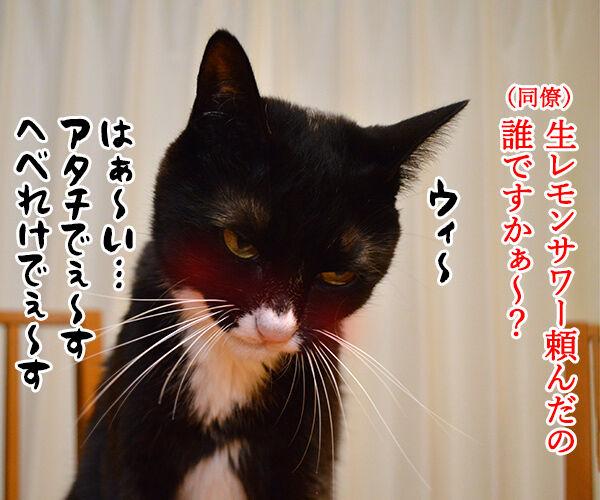 新入社員の歓迎会あるある 猫の写真で4コマ漫画 2コマ目ッ