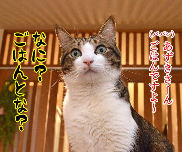 あずきさん ごはんだよぉー 猫の写真で4コマ漫画 1コマ目ッ
