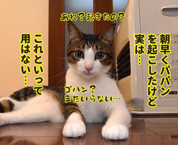 実は○○だった話 猫の写真で4コマ漫画 3コマ目ッ
