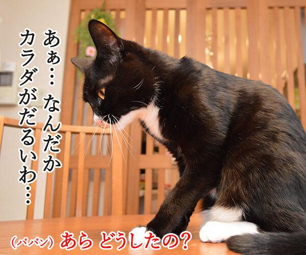 カラダがだるいの 猫の写真で4コマ漫画 1コマ目ッ