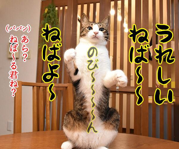 7月10日は『納豆』の日なんですってッ 猫の写真で4コマ漫画 2コマ目ッ