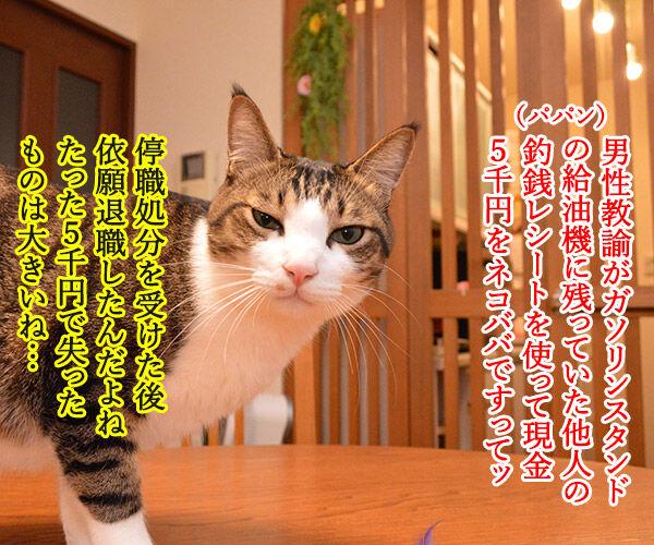 小学校教諭がガソリンスタンドで5000円をネコババですってッ 猫の写真で4コマ漫画 1コマ目ッ