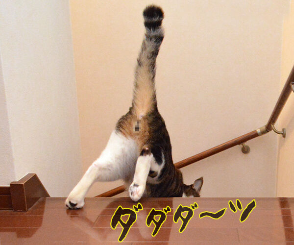 運動会で走る我が子 猫の写真で4コマ漫画 3コマ目ッ