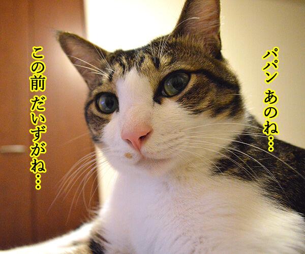 だってボク 猫の写真で4コマ漫画 1コマ目ッ