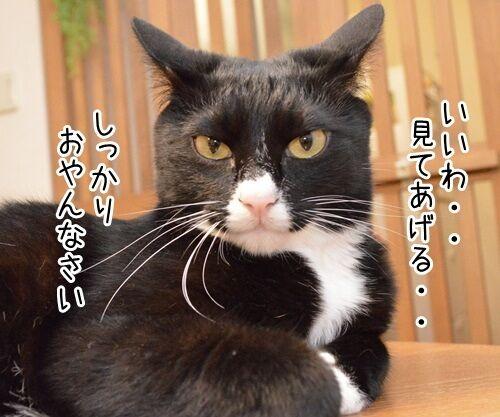 ネタ見せ 其の二 猫の写真で4コマ漫画 2コマ目ッ