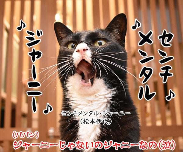ジャニー喜多川さんのご冥福を心よりお祈り申し上げます 猫の写真で4コマ漫画 4コマ目ッ