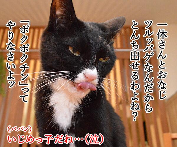 とんちんかんちん一休さん 猫の写真で4コマ漫画 1コマ目ッ