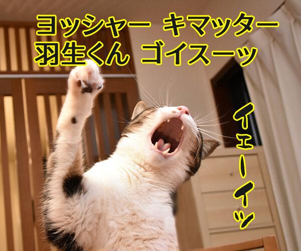 羽生くーんッ ガンバッテーッ 猫の写真で4コマ漫画 3コマ目ッ