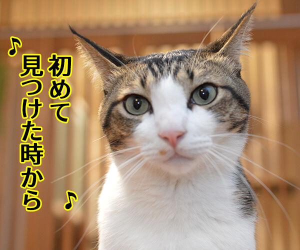 君だけを見ていた 猫の写真で4コマ漫画 3コマ目ッ
