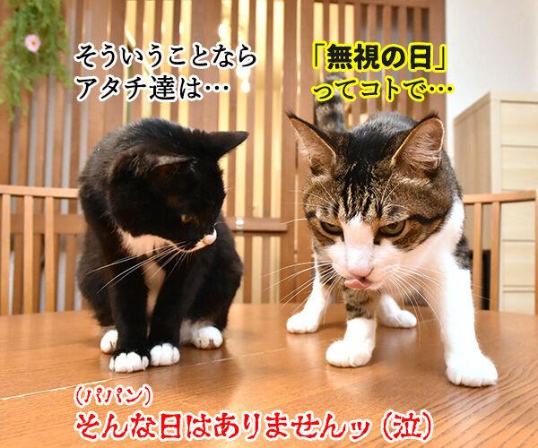 6月4日は何の日でしょうかッ? 猫の写真で4コマ漫画 4コマ目ッ