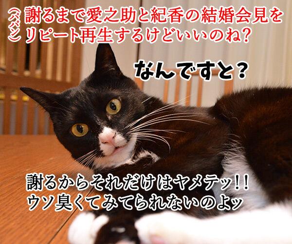 ちゃんと謝らなきゃダメッ 猫の写真で4コマ漫画 2コマ目ッ