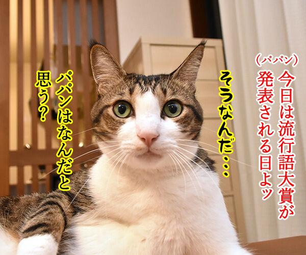 きょうは流行語大賞の発表日なのッ 猫の写真で4コマ漫画 1コマ目ッ