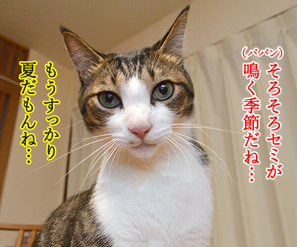 セミの声 猫の写真で4コマ漫画 1コマ目ッ