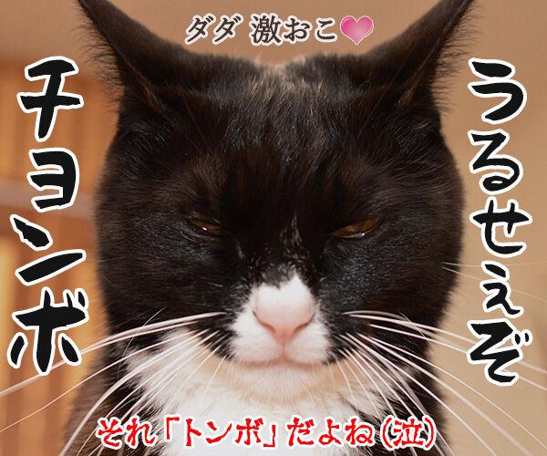 「魔女の宅急便」を見たのよッ 猫の写真で4コマ漫画 4コマ目ッ