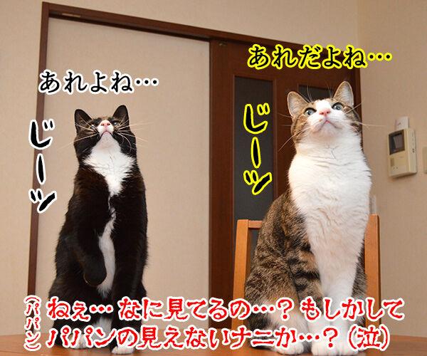 ただいまぁ 其の四 猫の写真で4コマ漫画 3コマ目ッ