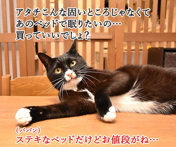 ネコ用ベッドが欲しいのよッ 猫の写真で4コマ漫画 1コマ目ッ