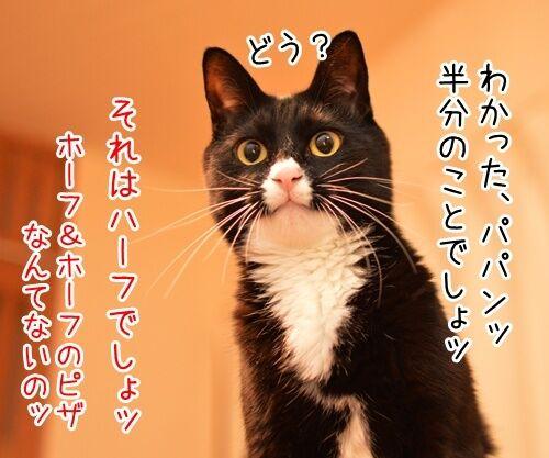二年目のほうふ 猫の写真で4コマ漫画 3コマ目ッ