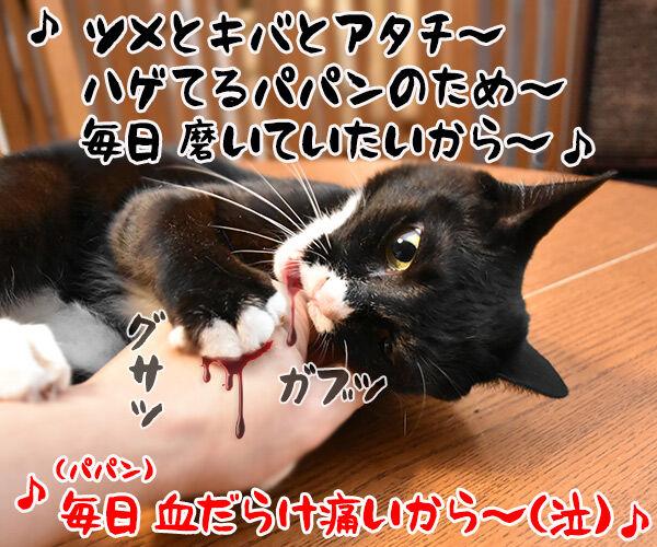 「部屋とYシャツと私」の続編が出てたのよッ 猫の写真で4コマ漫画 4コマ目ッ