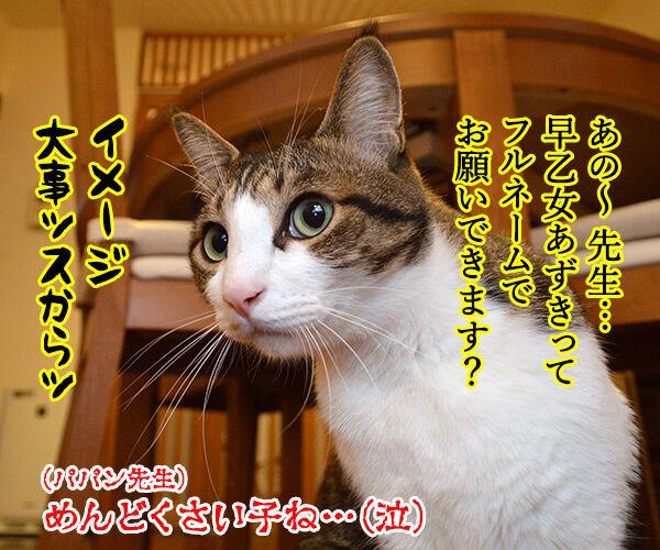 出席とりますッ 猫の写真で4コマ漫画 4コマ目ッ