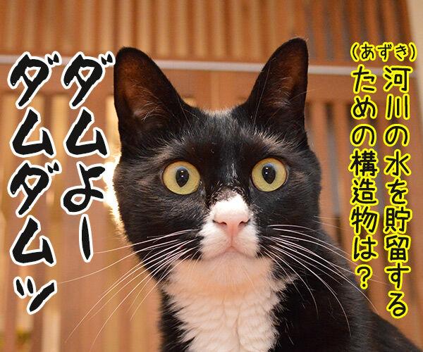 ダメよー ダメダメッ 猫の写真で4コマ漫画 4コマ目ッ